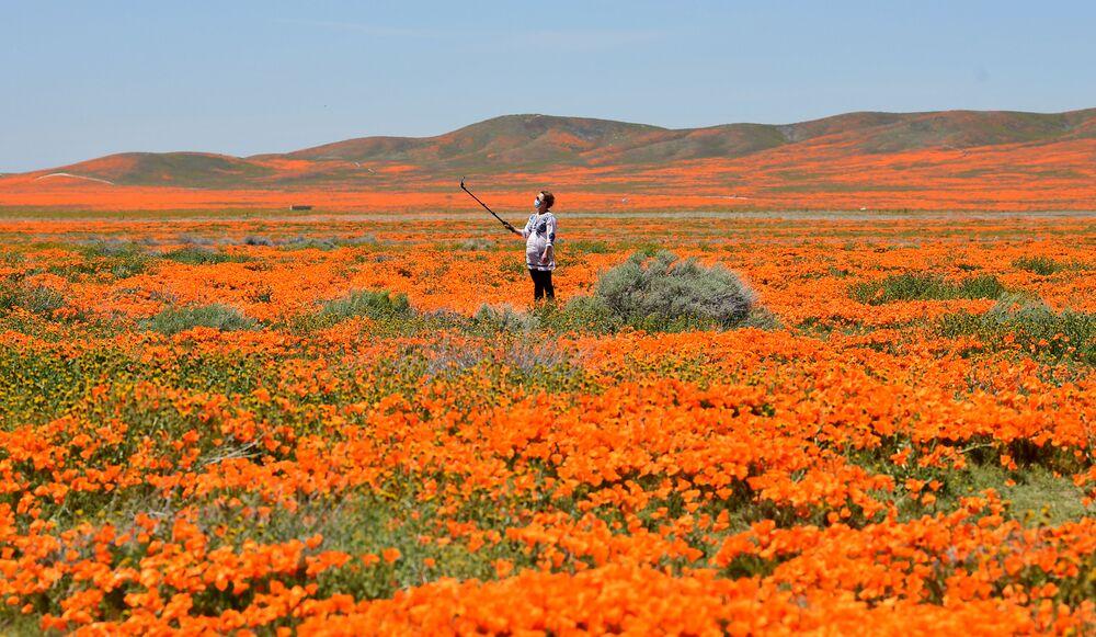Makowe pole w Kalifornii