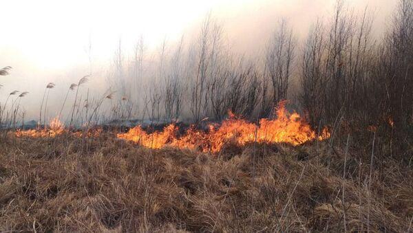 Pożar w Biebrzańskim Parku Narodowym - Sputnik Polska