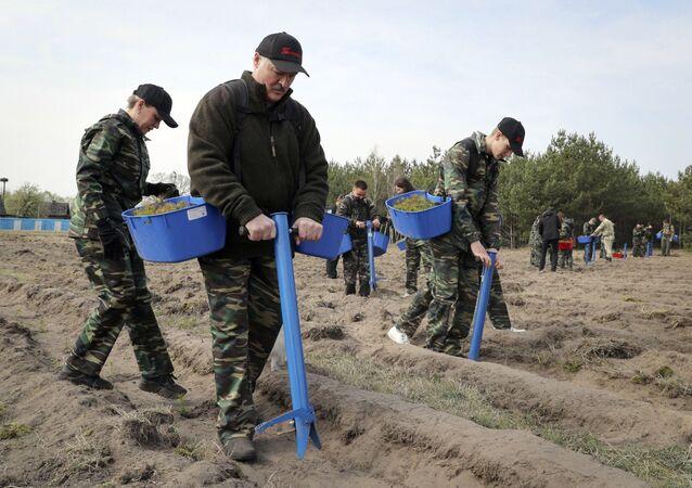 Aleksander Łukaszenka sadzi drzewa