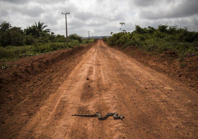 Żmija na drodze w stanie Parana, w Brazylii