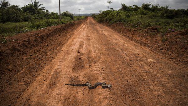 Żmija na drodze w stanie Parana, w Brazylii - Sputnik Polska