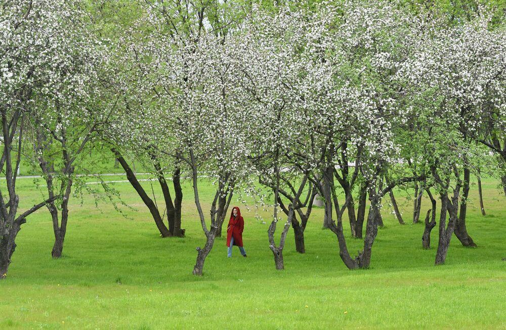 Kwitnące drzewa w Zachodnim Biriulewie, Moskwa.