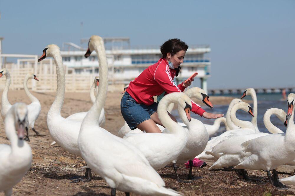 Dziewczyna fotografuje łabędzie na plaży w Eupatorii, Krym