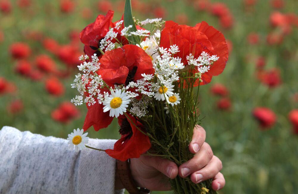 Pęk polnych kwiatów