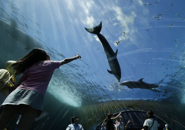 Delfiny w oceanarium w Tokio