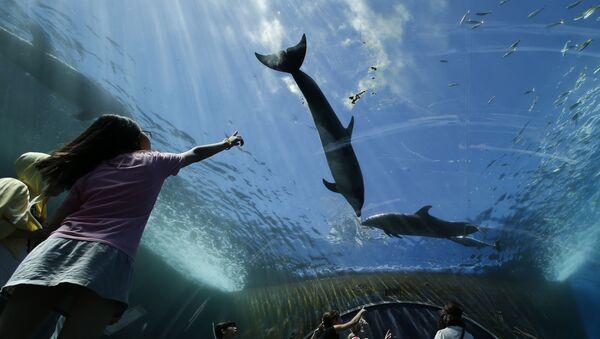 Delfiny w oceanarium w Tokio - Sputnik Polska