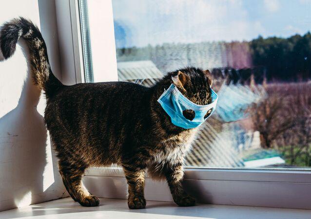 Kot w masce
