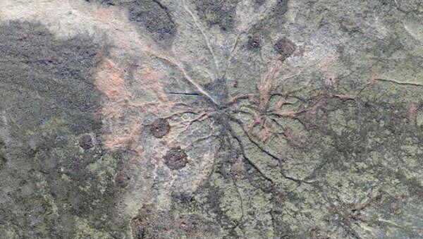 Skamieliny roślinne z okresu dewonu - Sputnik Polska