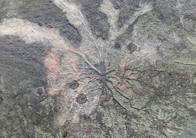 Skamieliny roślinne z okresu dewonu