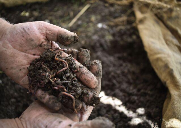 Syryjski rolnik Hasan Khalifa stworzył pierwszą w Syrii fermę dżdżownic.