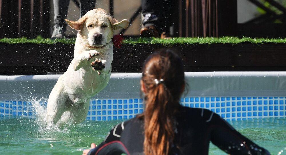 Pies skaczący do wody