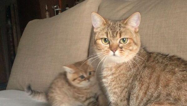 Mały kot i jego mama - Sputnik Polska