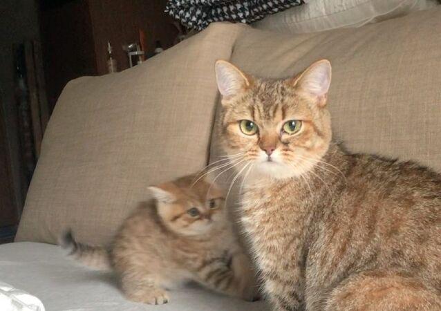 Mały kot i jego mama