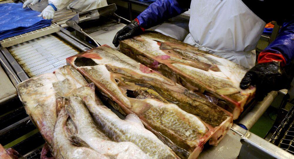 Zamrożone partie ryby w zakładzie rybnym