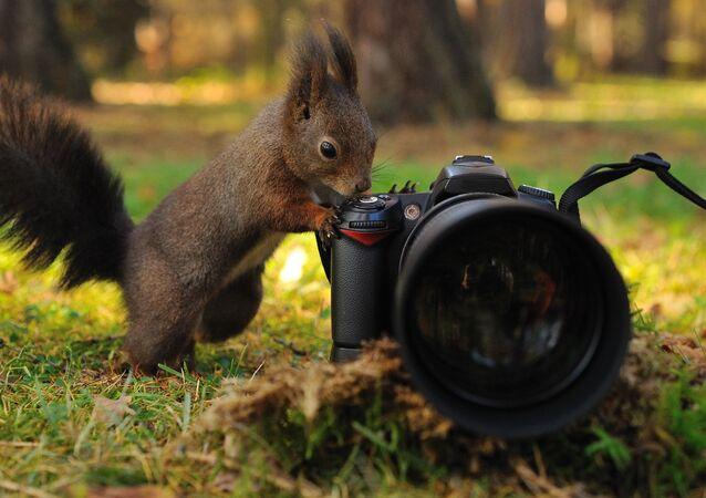 Wiewiórka z aparatem fotograficznym