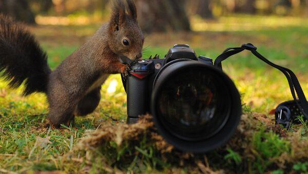 Wiewiórka z aparatem fotograficznym - Sputnik Polska
