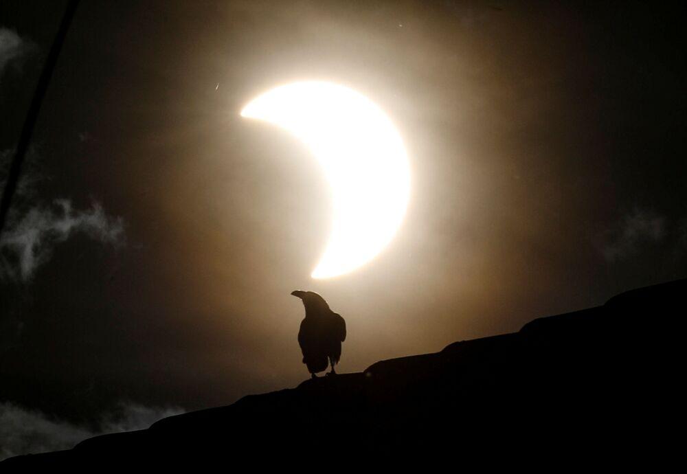 Wrona podczas częściowego zaćmienia Słońca w Kenii