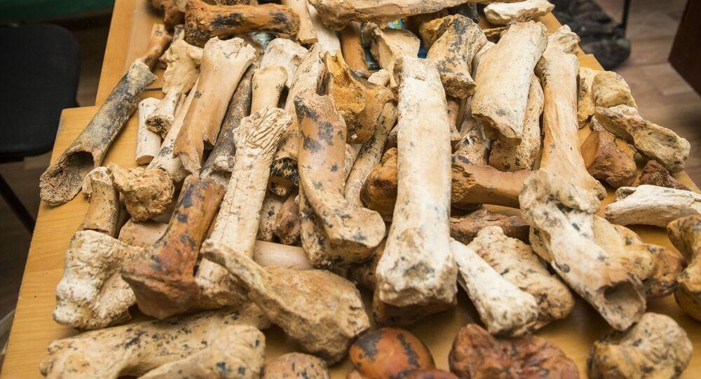 Szczątki kostne pradawnego nosorożca Stefanorinusa znalezione w jaskini Tawryda na Krymie