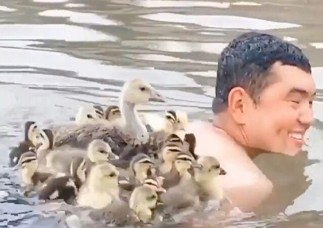 Mężczyzna pływający z kaczkami
