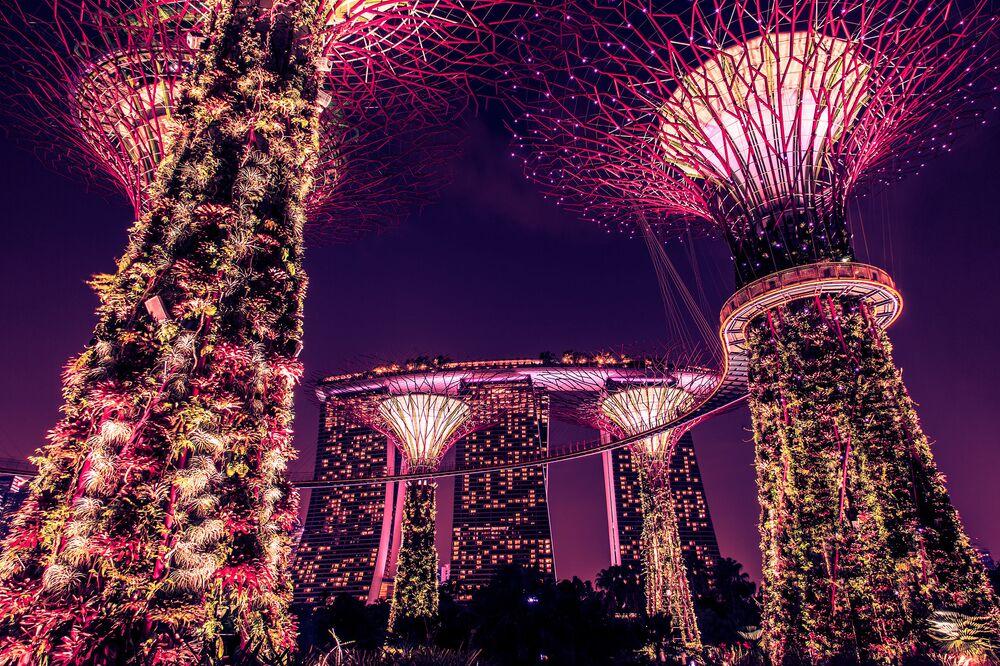 Park Supertree Grove w Singapurze