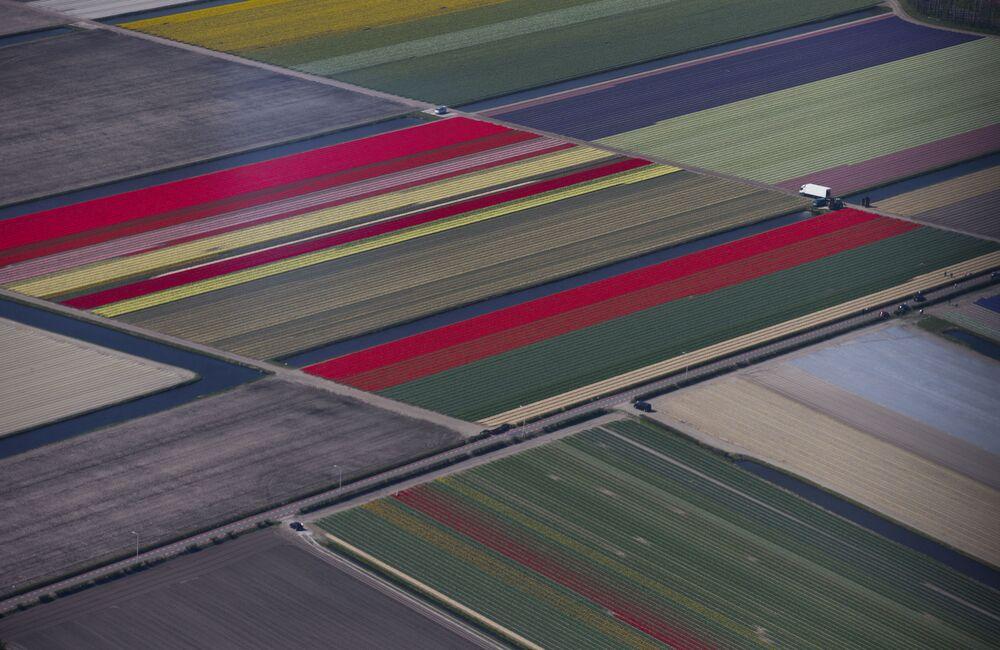 Pola w Holandii