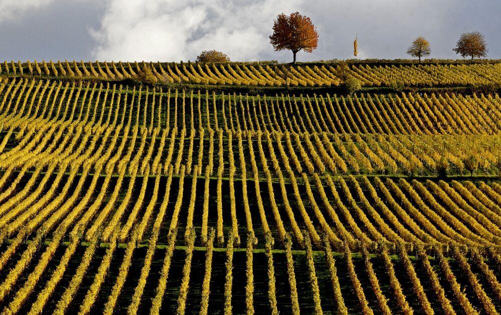 Jesienny pejzaż w Niemczech