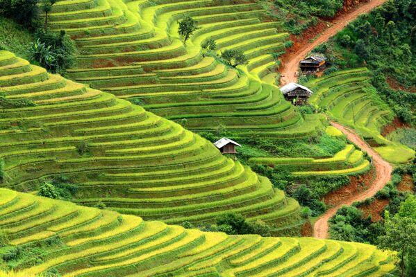 Pola ryżowe we Wietnamie - Sputnik Polska