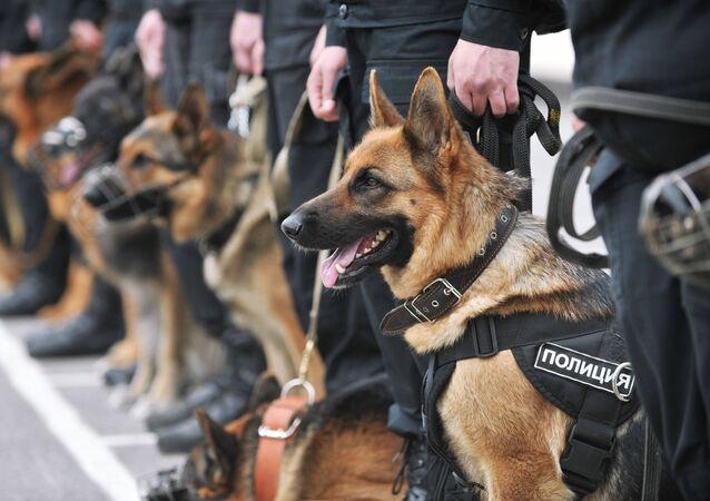 Mistrzostwa psów służbowych, Rostów nad Donem