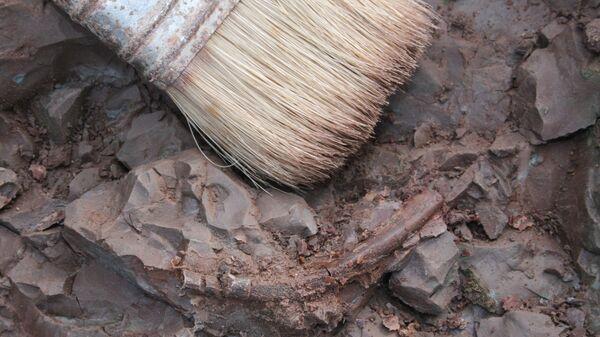 Wykopaliska archeologiczne - Sputnik Polska