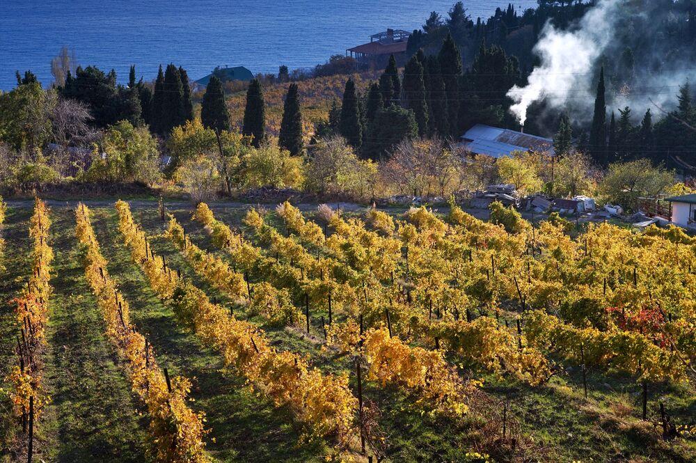 Widok na winnice i wybrzeże Morza Czarnego w okolicach dużej Jałty we wsi Beketowo na Krymie.