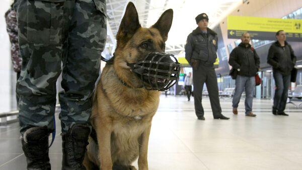 Rosyjska policja - Sputnik Polska