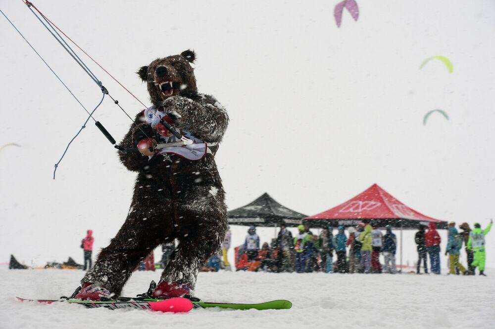 Sportowiec w kostiumie niedźwiedzia podczas wyścigu w dyscyplinie freestyle w ramach Pucharu Syberii w zimowym kitingu na skutym lodem basenie Nowosybirskiej Hydroelektrowni.