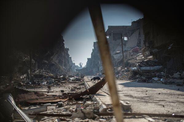 Zniszczenia w rejonie Jarmuk w Damaszku. - Sputnik Polska