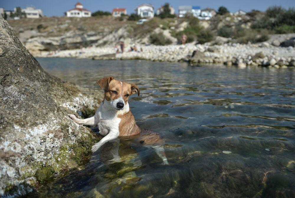 Pies nad zatoką w Sewastopolu