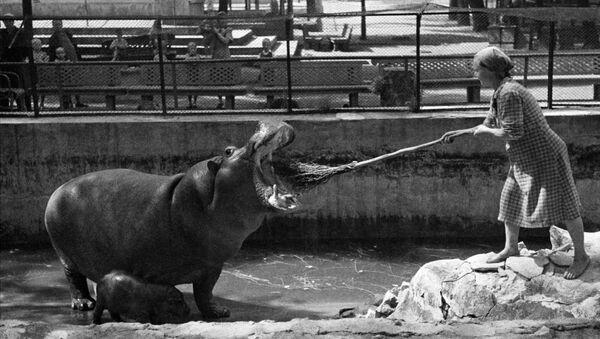 Pracowniczka z hipopotamem w Moskiewskim zoo - Sputnik Polska