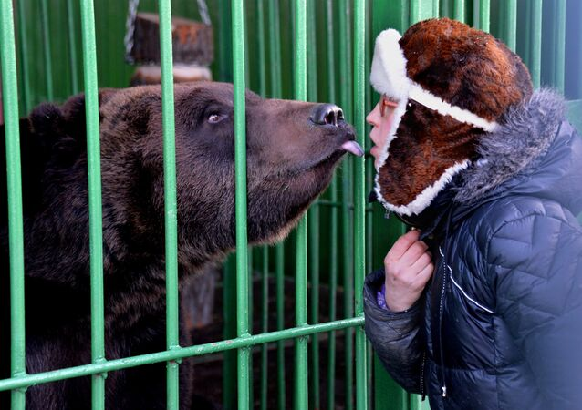 Niedźwiedź, Kamczatka