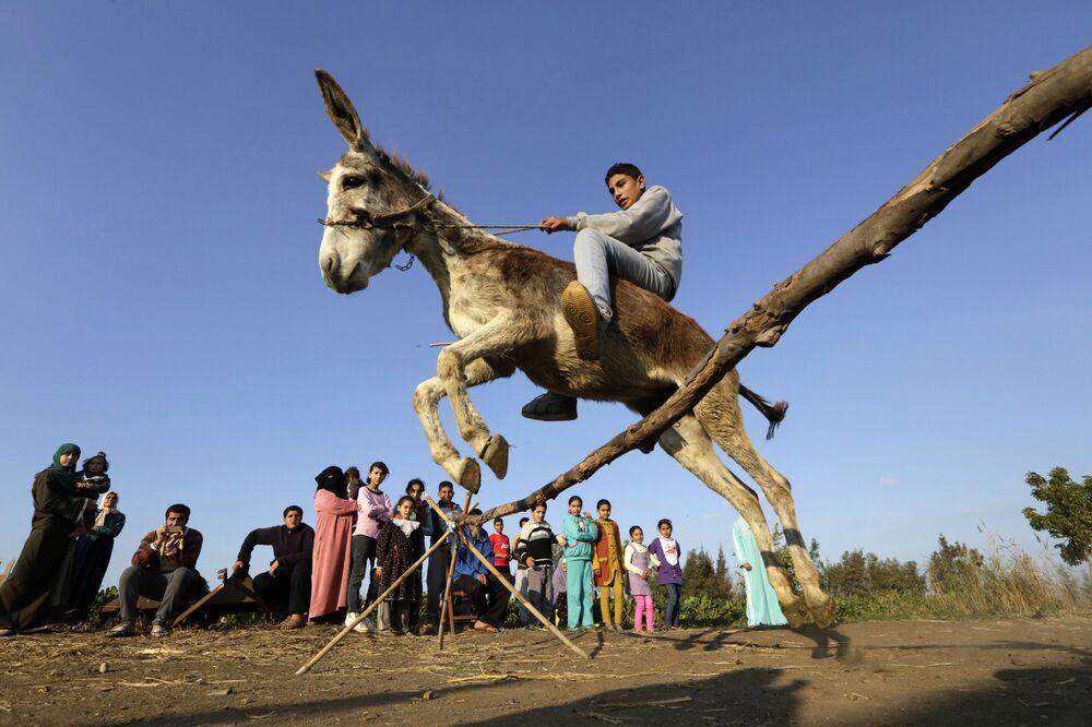 Egipski rolnik na ośle skacze przez barierę w miejscowości Al-Arid
