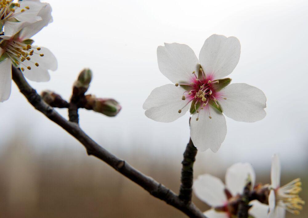 Kwitnące drzewo, wieś Niżniaja Kutuzówka