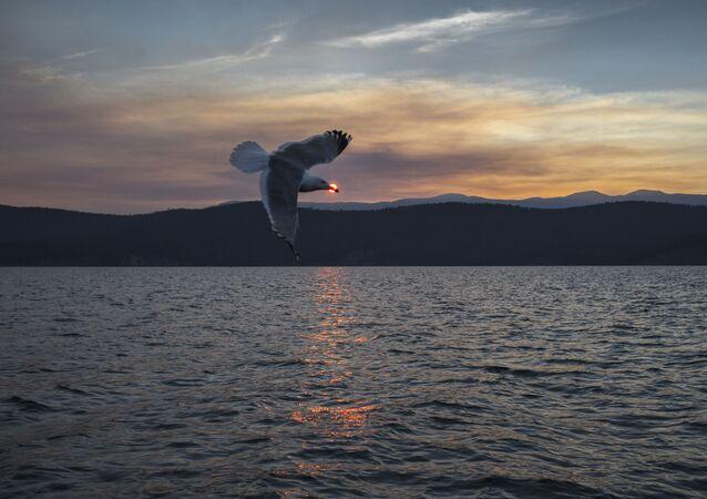 Wyspy Uszkanji, jezioro Bajkał, Rosja