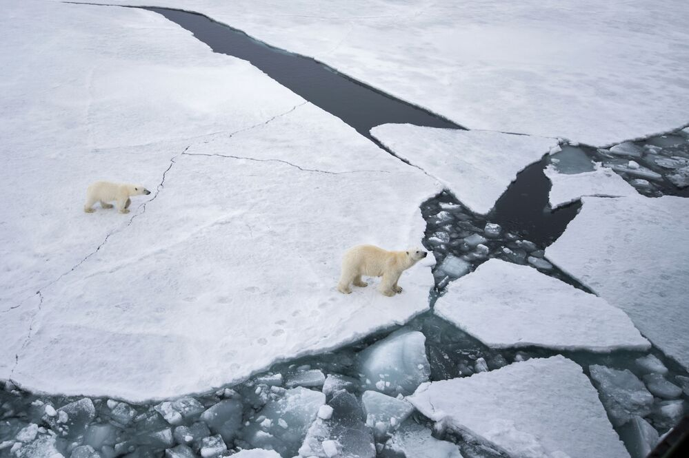 Niedźwiedzica z niedźwiadkiem, Ziemia Franciszka Józefa, Rosja