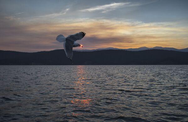 Wyspy Uszkanji, jezioro Bajkał, Rosja - Sputnik Polska