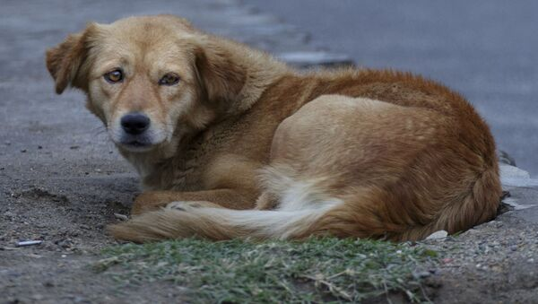 Bezdomny pies - Sputnik Polska