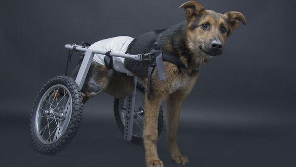 Pies inwalida o imieniu Szans - Sputnik Polska