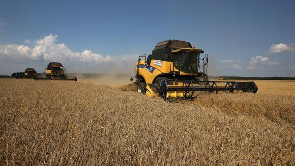 Żniwa pszenicy na południu Rosji - Sputnik Polska