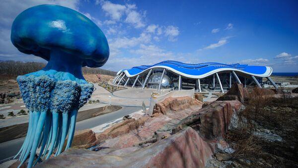 Oceanarium na wyspie Ruskij - Sputnik Polska