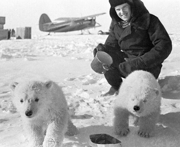 Białe niedźwiedzie na dryfującej stacji naukowej Biegun Północny-19 - Sputnik Polska
