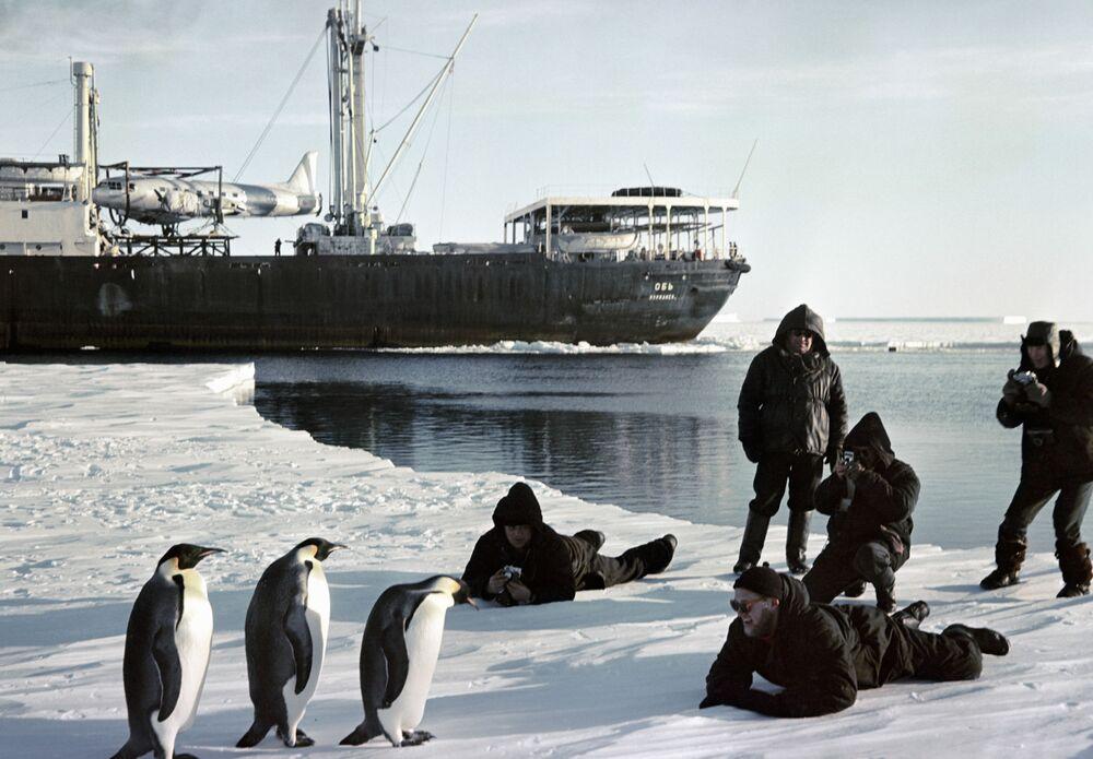 Marynarze z lodołamacza Ob fotografują pingwinów