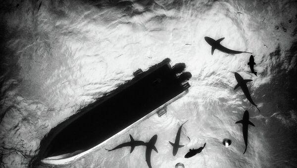 morskie dno - Sputnik Polska