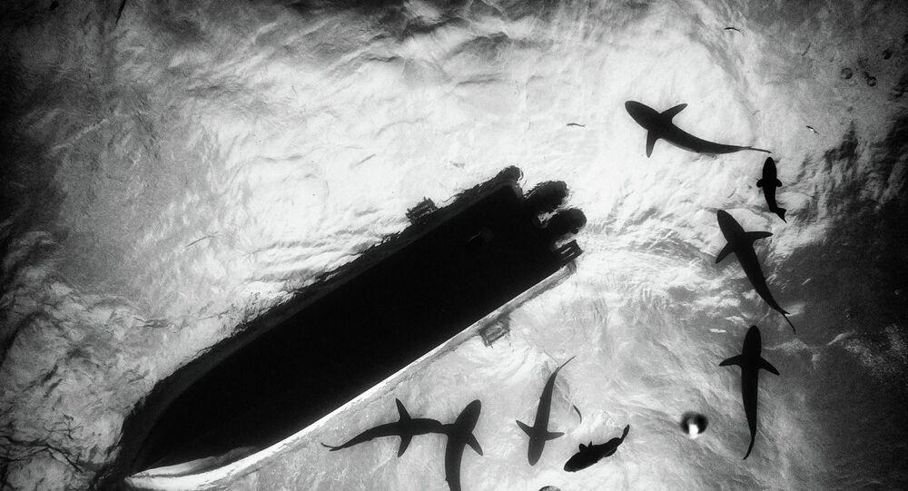 morskie dno