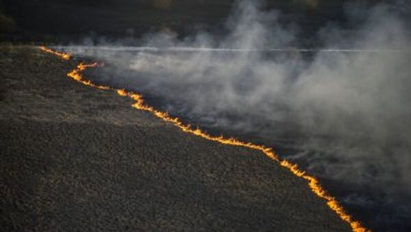 Pożar leśny w strefie czarnobylskiej - Sputnik Polska